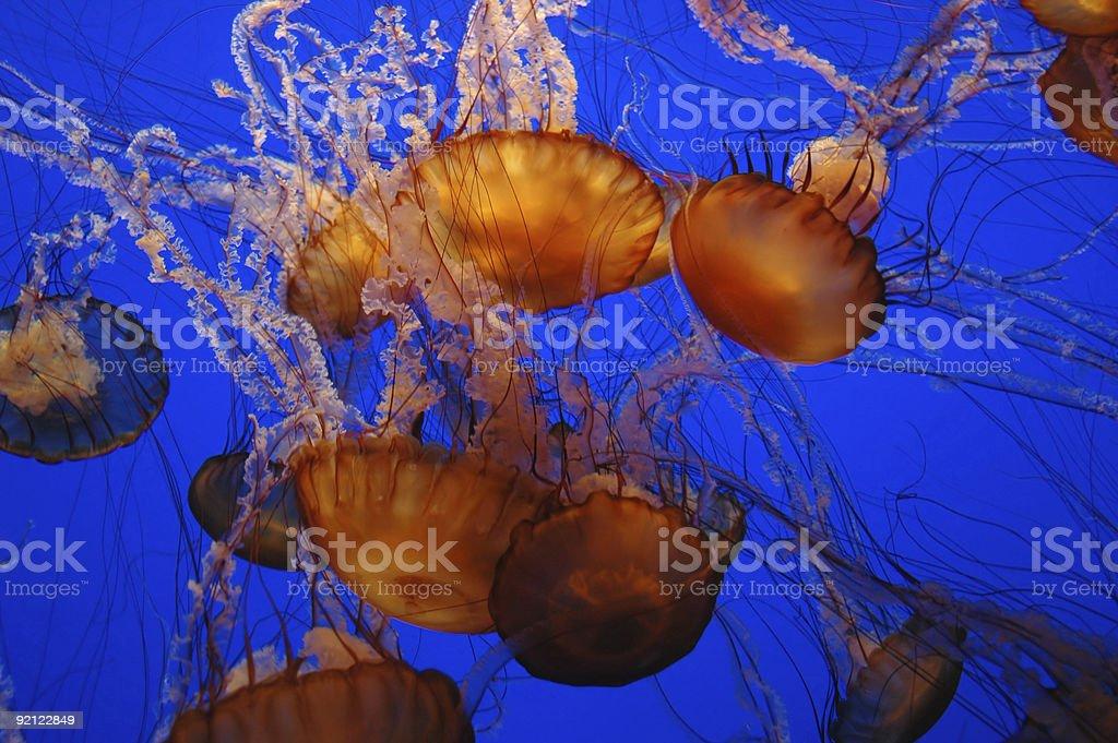 Jellyfish Underwater royalty-free stock photo