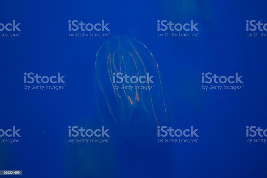 Jellyfishes. stock photo