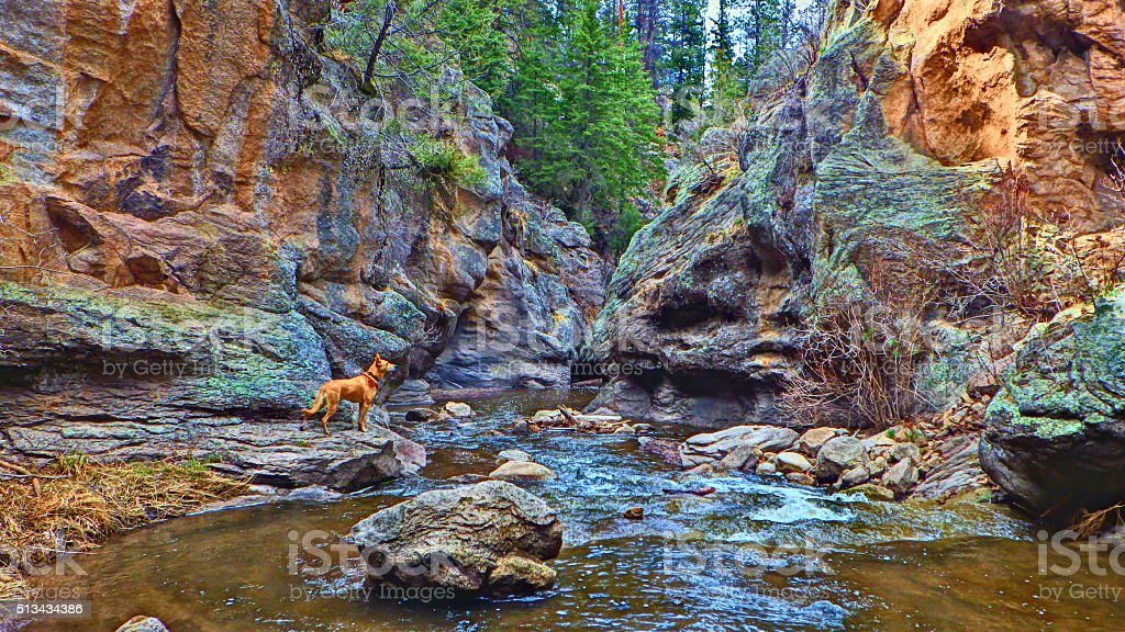 Jemez Falls with Dog HDR stock photo