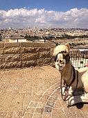 Jerusalem, Israel travel background