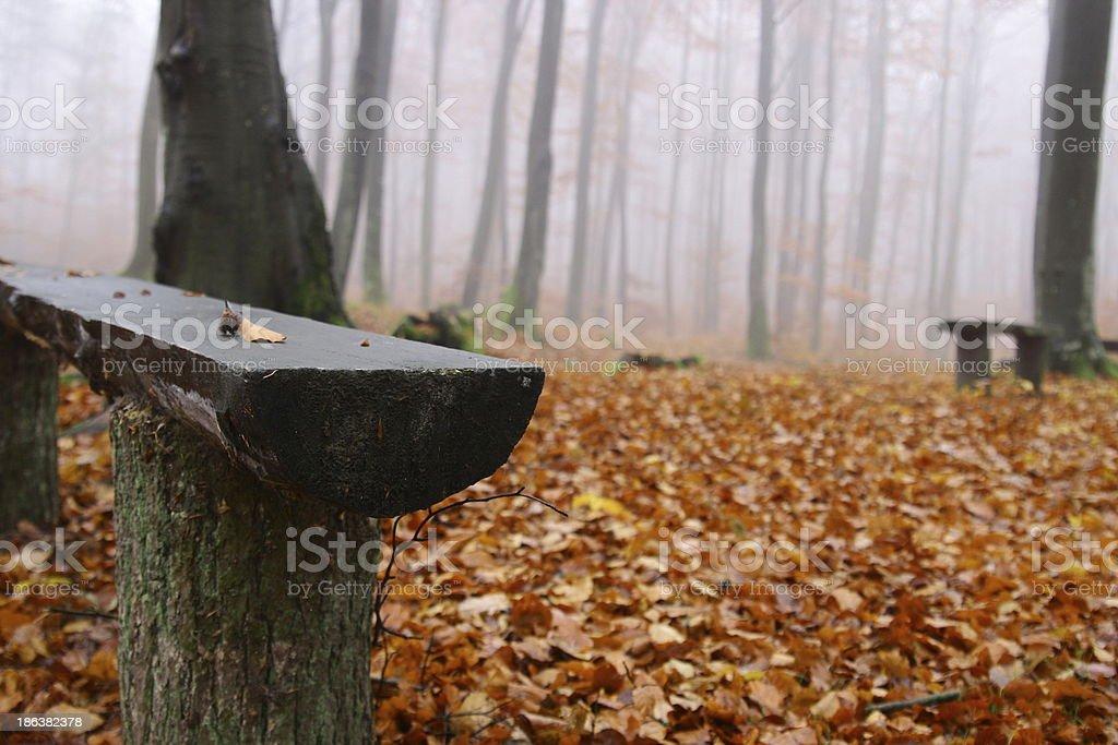 jesie? w lesie royalty-free stock photo