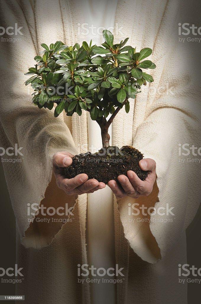Jesus Hands Holding Tree stock photo