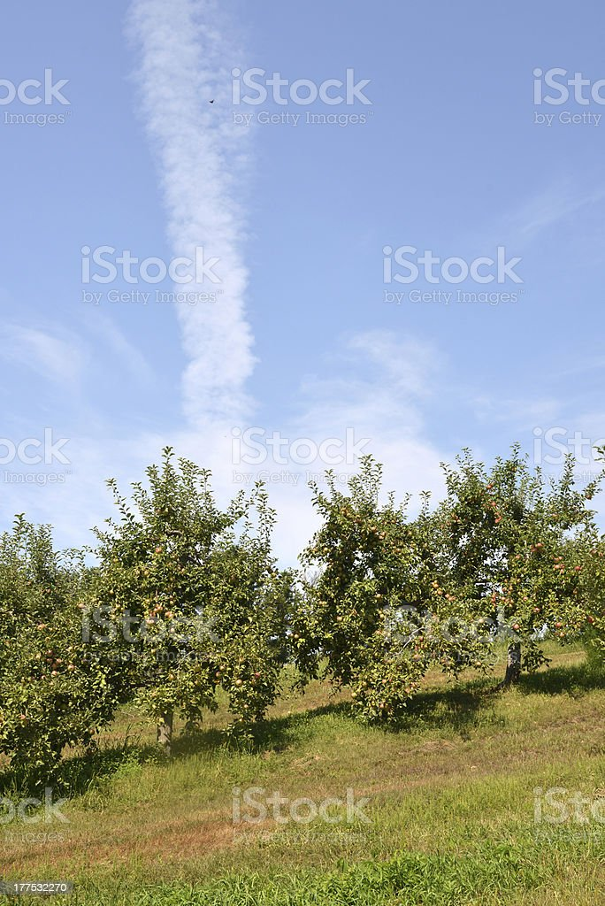 Jet Stream over the Orchard royalty-free stock photo