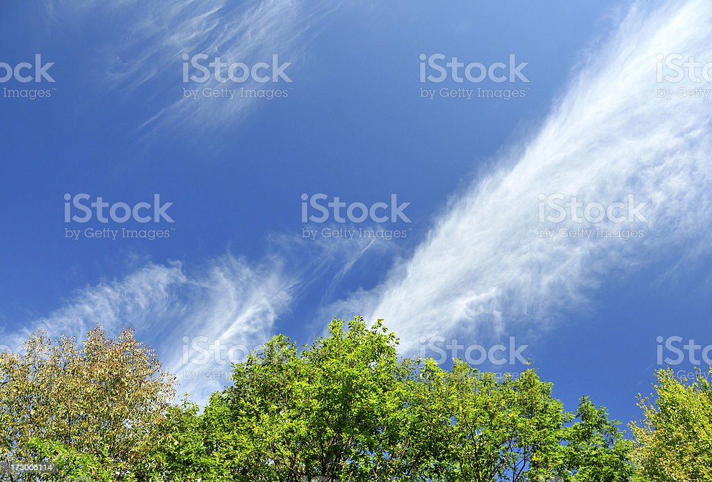 Jet Stream Over Trees stock photo