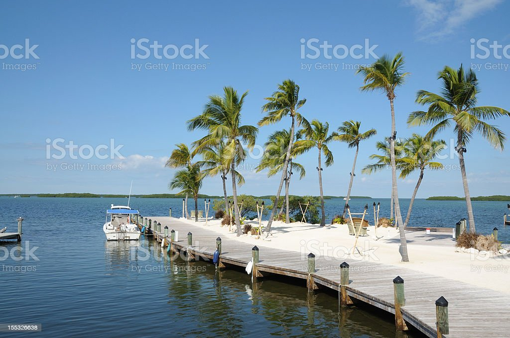 Jetty and Palm Trees stock photo