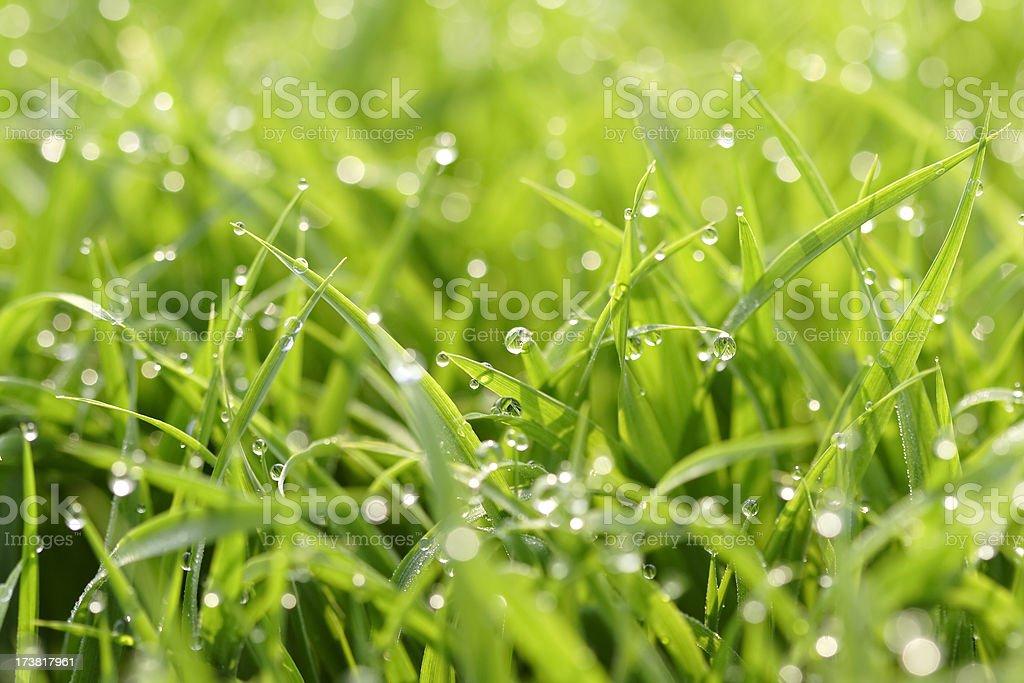 Jewel on grass royalty-free stock photo
