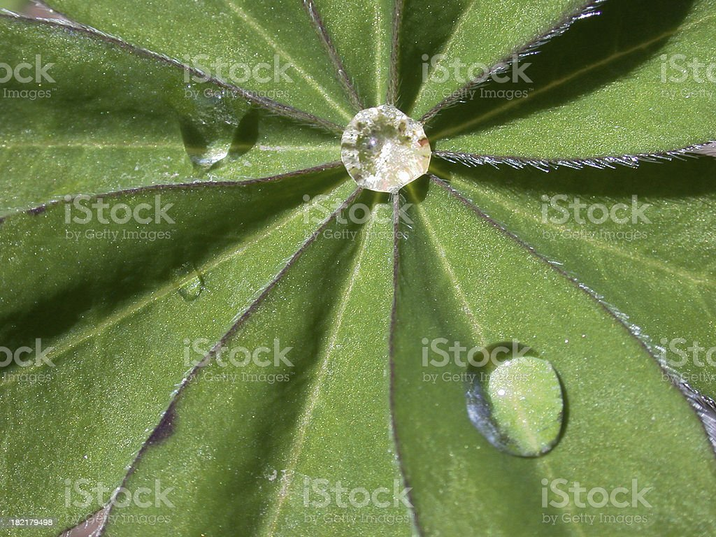 Jewels of life royalty-free stock photo