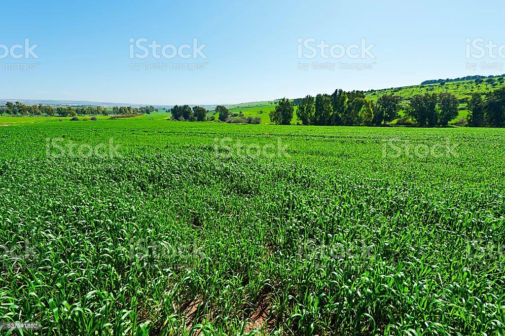 Jezreel Valley in Israel stock photo