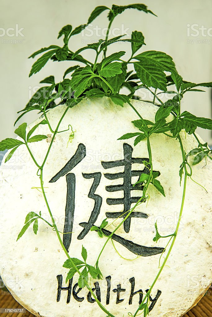 Jiaogulan, herb of longevity stock photo