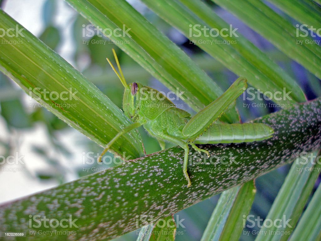 Jiminy Cricket stock photo