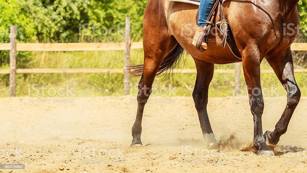 Jockey training riding horse. Sport activity stock photo