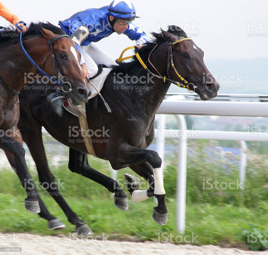 Jockeys racing horses neck and neck royalty-free stock photo