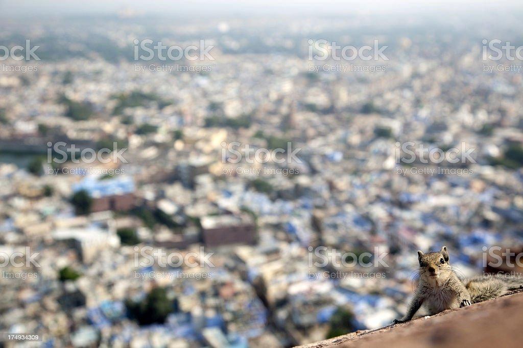 Jodhpur, India royalty-free stock photo