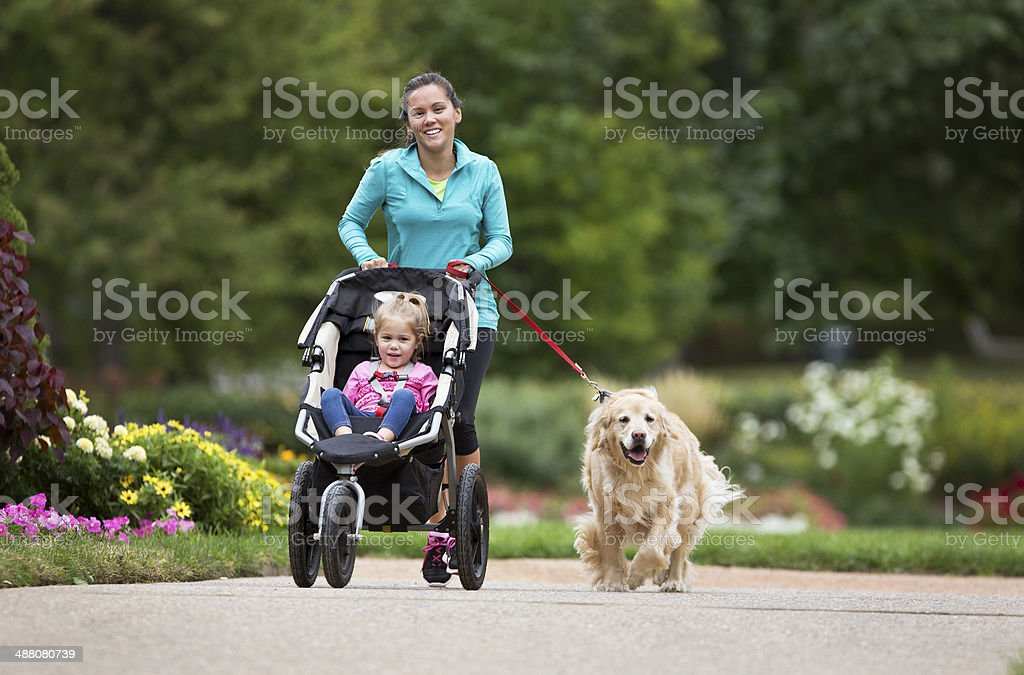 Jogger With Golden Retriever and Baby Jogger on Paved Trail. royalty-free stock photo
