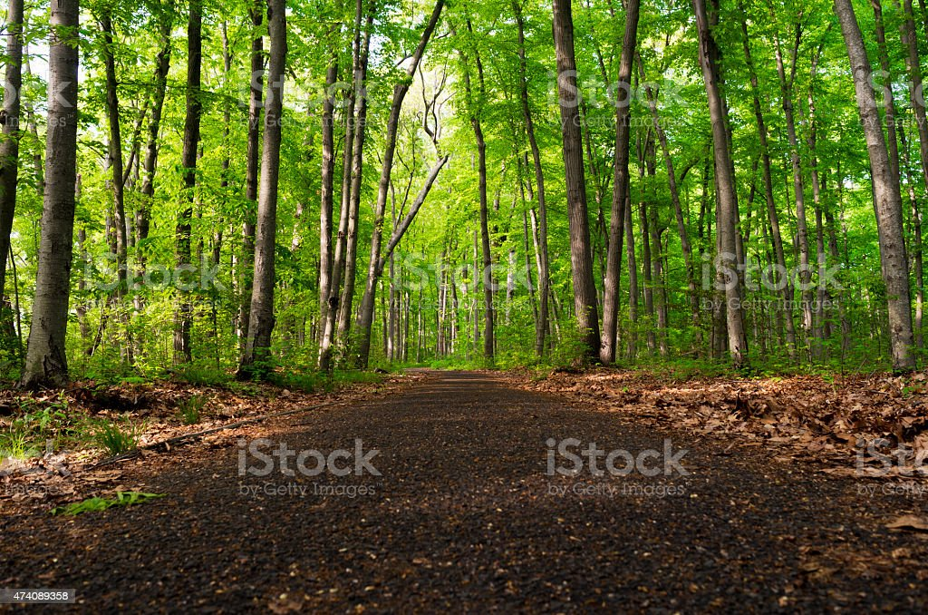 jogging trail in forest stock photo