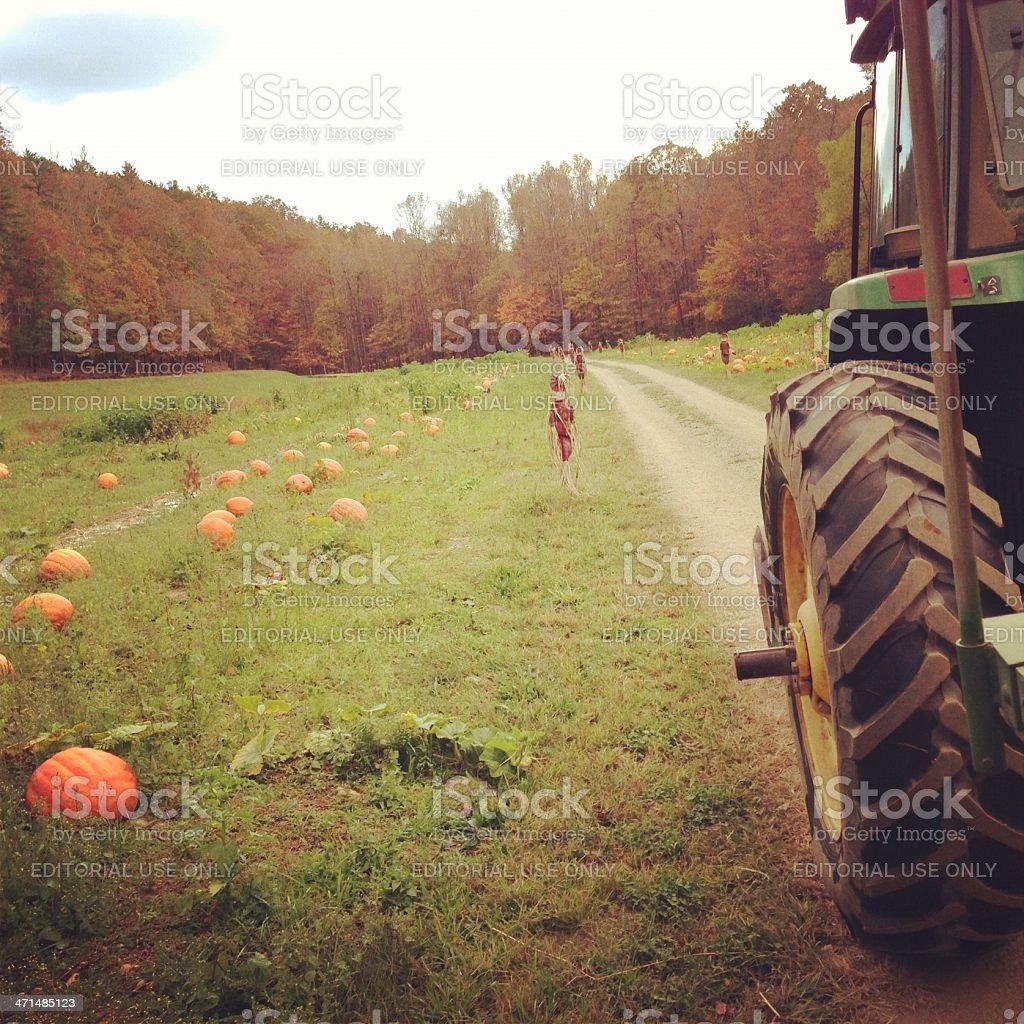 John Deer tractor in the pumpkin field stock photo