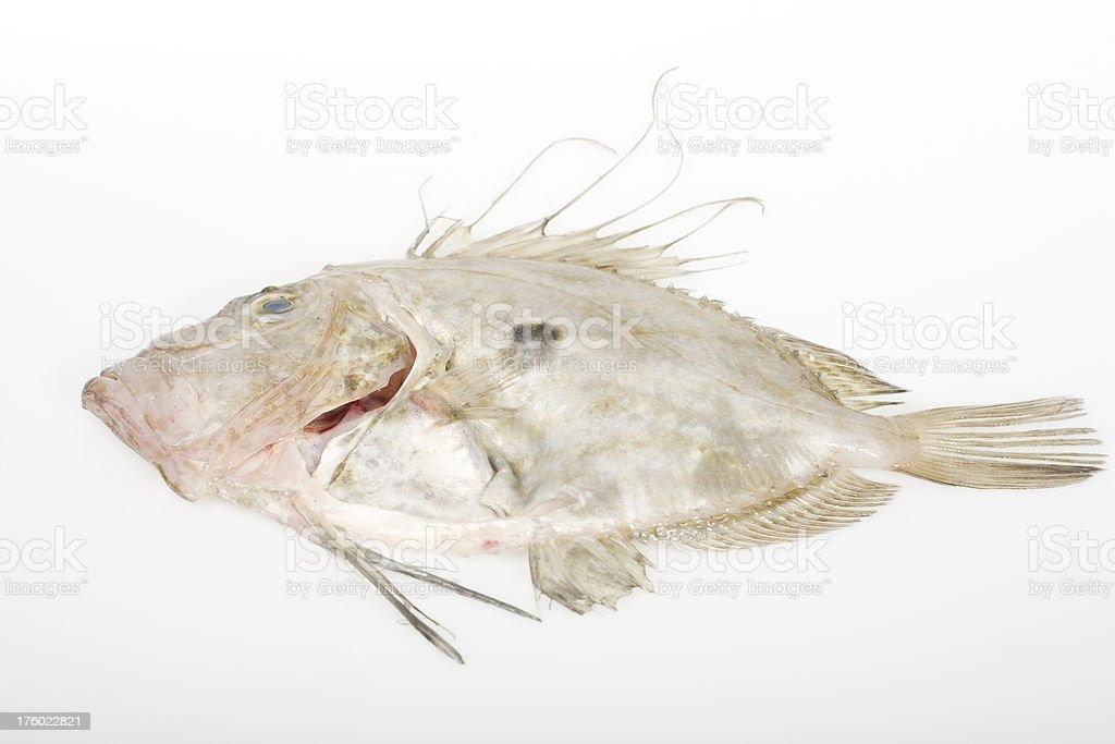 John Dory fish stock photo
