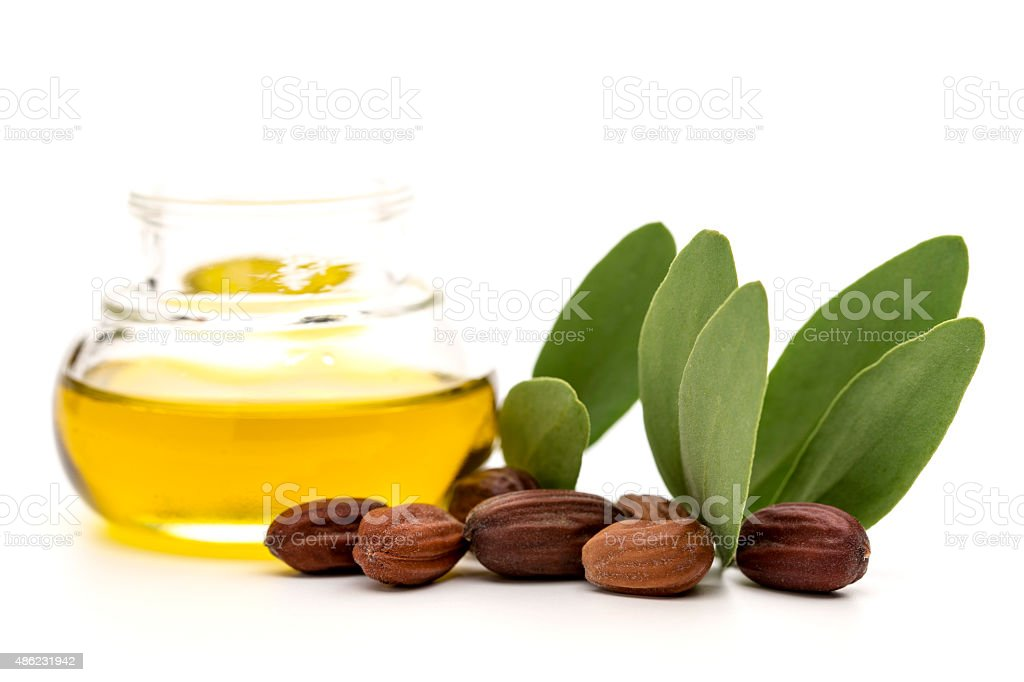 Jojoba oil, seeds and leaves stock photo
