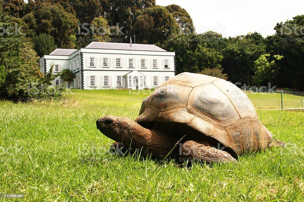 Jonathan giant tortoise at Plantation House St Helena Island stock photo