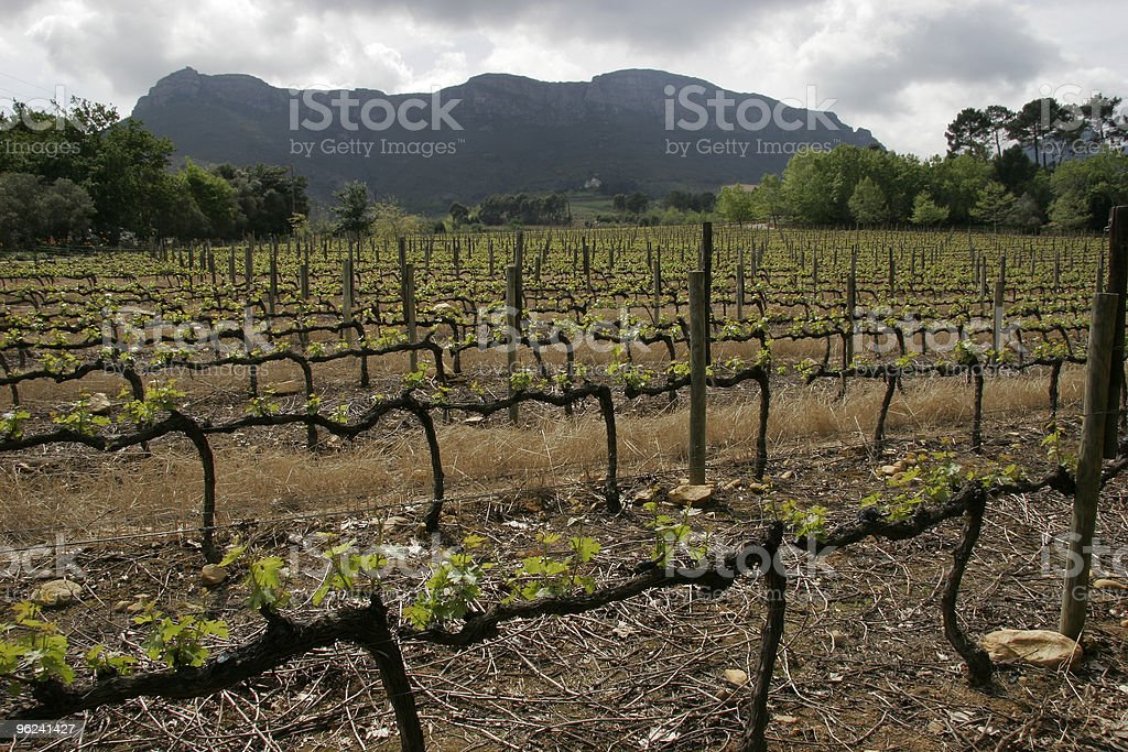 Jonkershoek Vineyard royalty-free stock photo