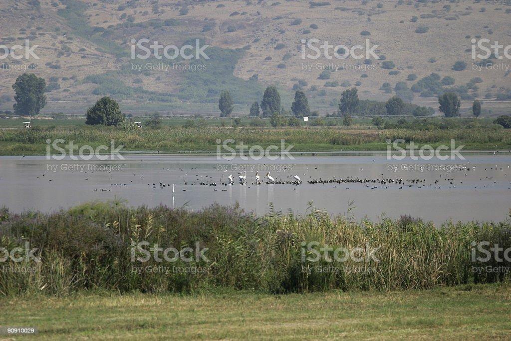 Jordan river value, Israel royalty-free stock photo