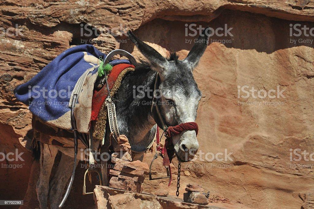 Jordanian Donkey at Petra stock photo