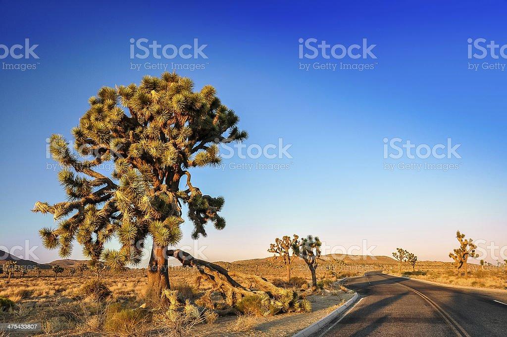 Joshua tree and desert road before sunset stock photo