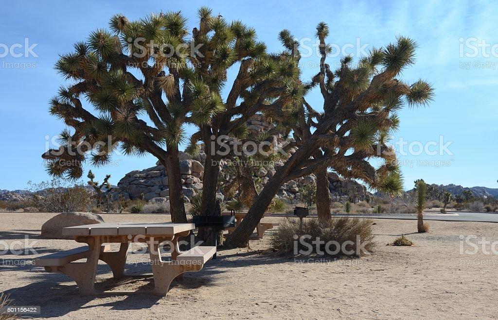 Joshua Tree and Picnic Table in Joshua Tree National Park royalty-free stock photo