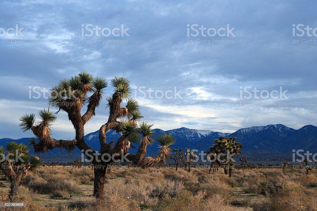 Joshua Tree cloudscape in Southern California high desert near Littlerock stock photo