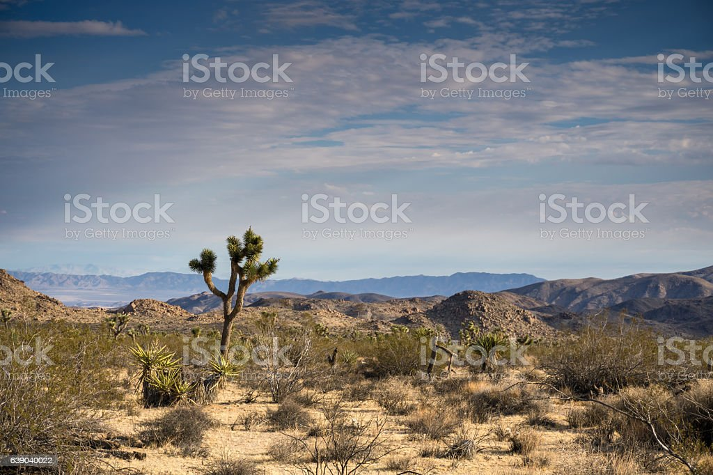 Joshua Tree Desert stock photo