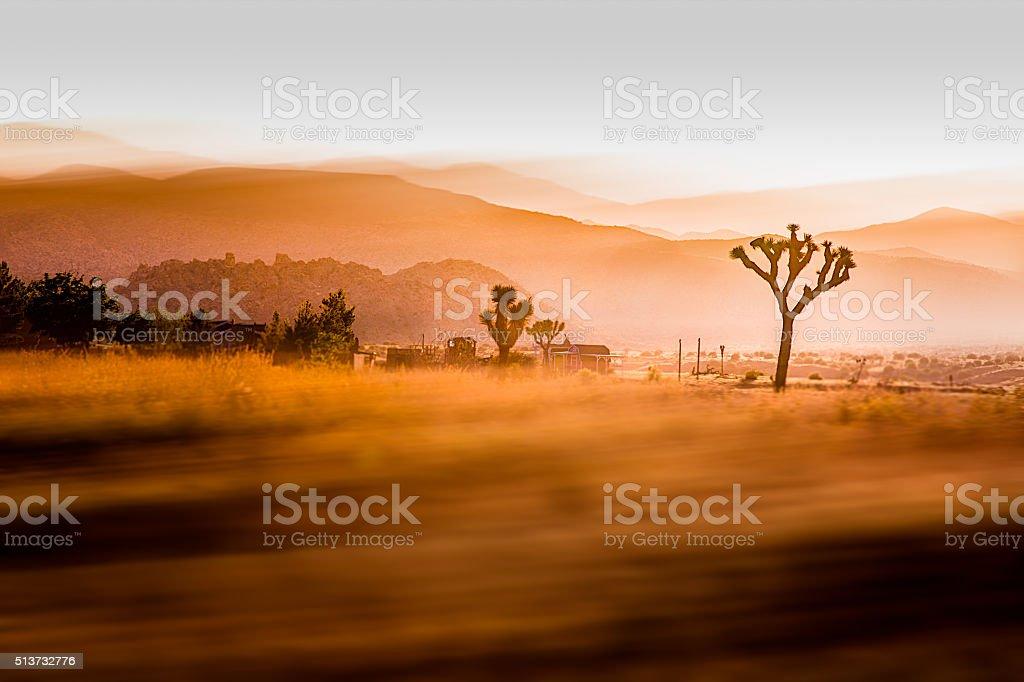 Joshua Tree Landscape stock photo