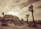 Joshua Tree Landscape Series 10