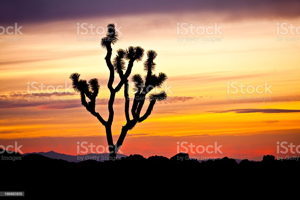 Joshua Tree National Monument stock photo