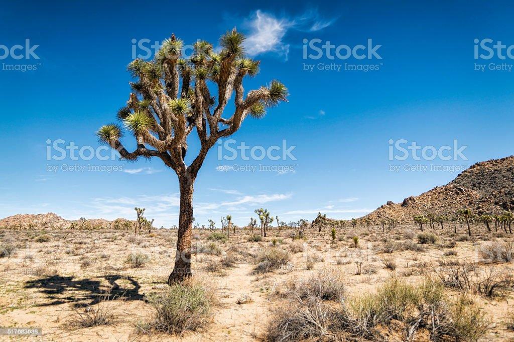 Joshua Tree National Park, California stock photo