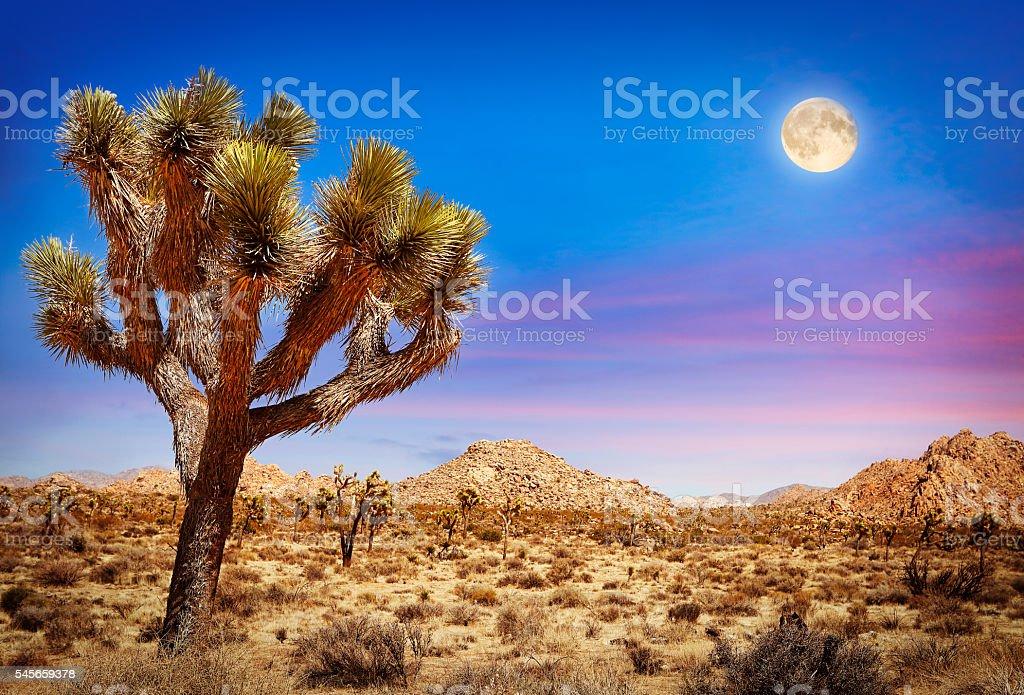 Joshua Tree National Park in California stock photo