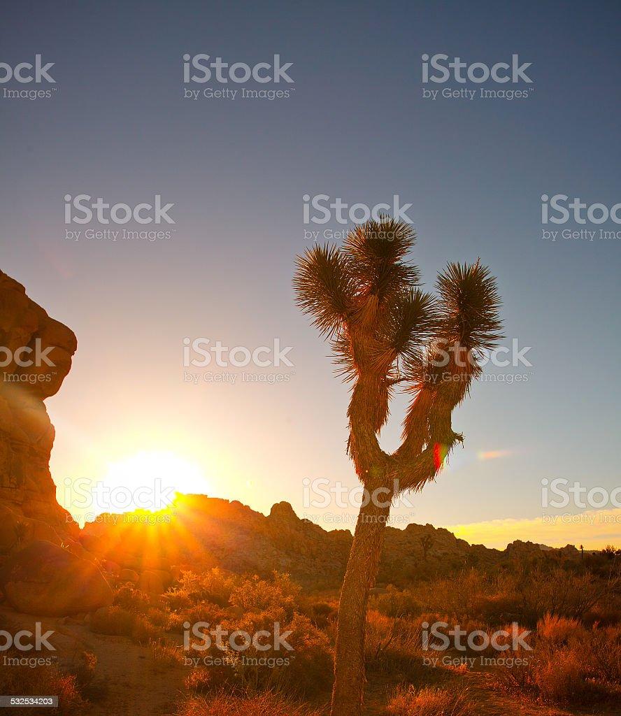 Joshua tree National Park in California USA stock photo