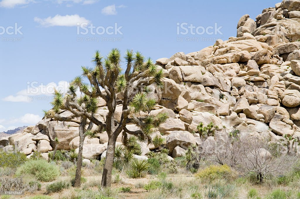 Joshua Tree National Park royalty-free stock photo