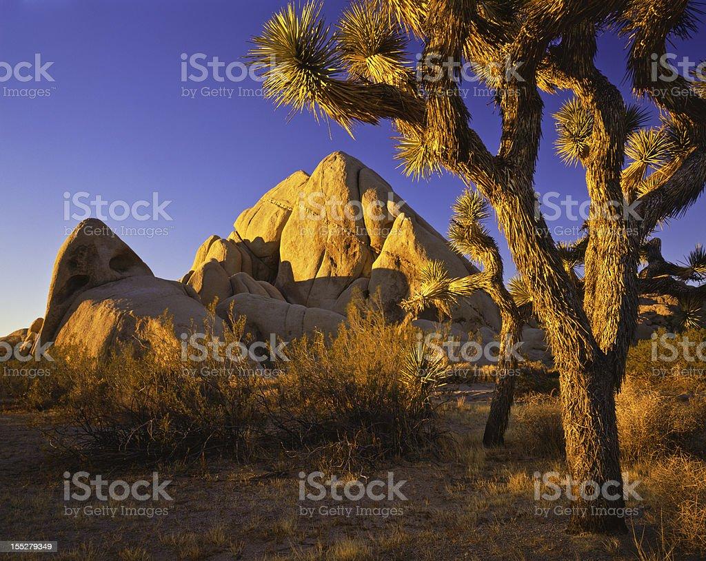 Joshua Tree National Park scene stock photo