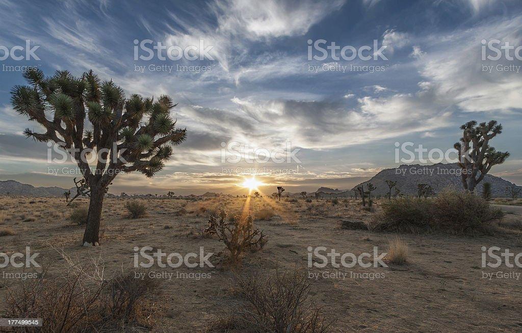 Joshua Tree National Park Sunrise stock photo
