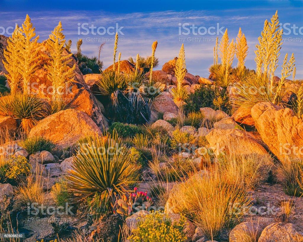 Joshua Tree National Park,CA stock photo
