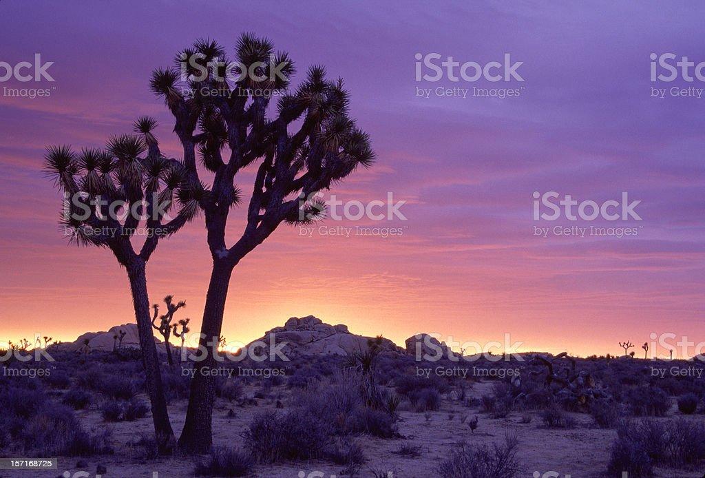 Joshua Tree Sunrise stock photo