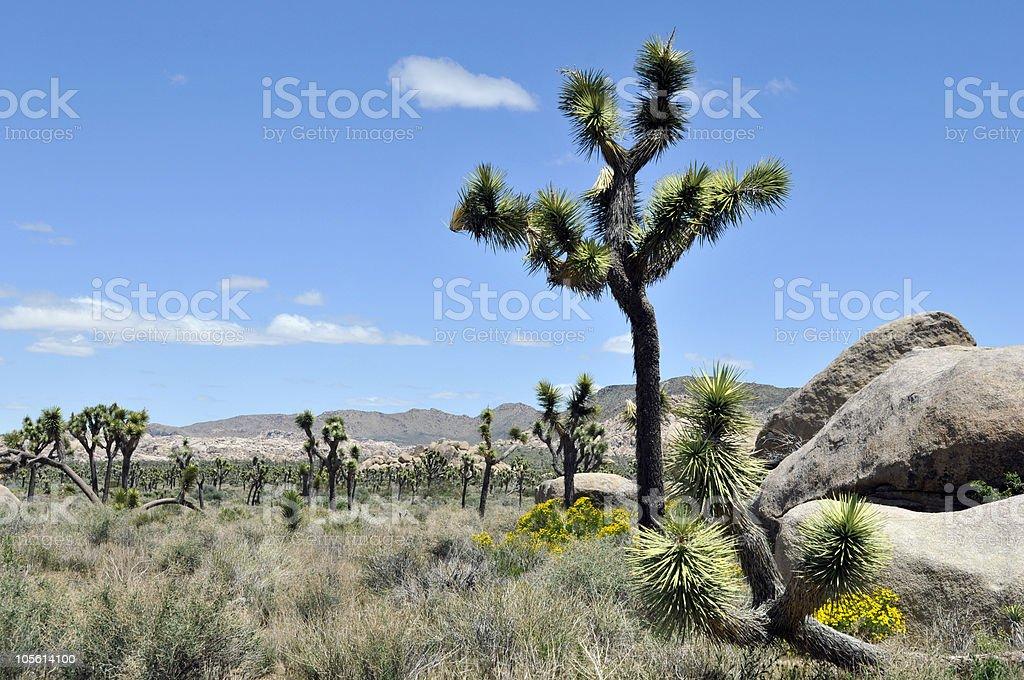 Joshua Trees and Rock Pile royalty-free stock photo