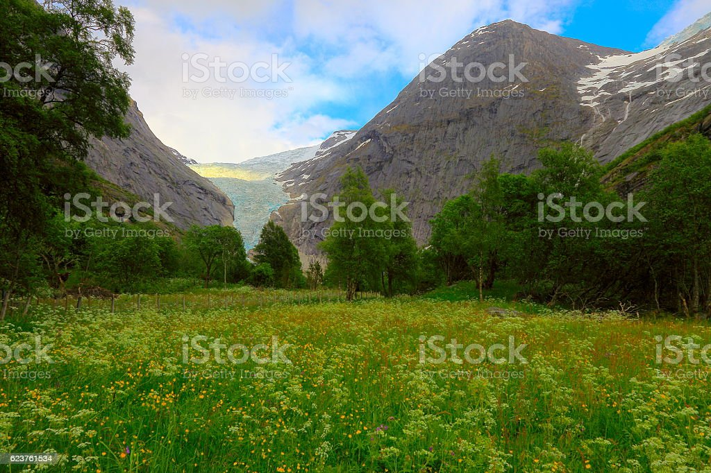 Jostedalsbreen paradise: Briksdal Glacier, wildflowers meadow - Jostedal, Norway, Scandinavia stock photo