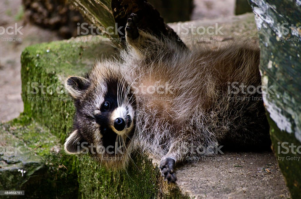 Joung Coon stock photo