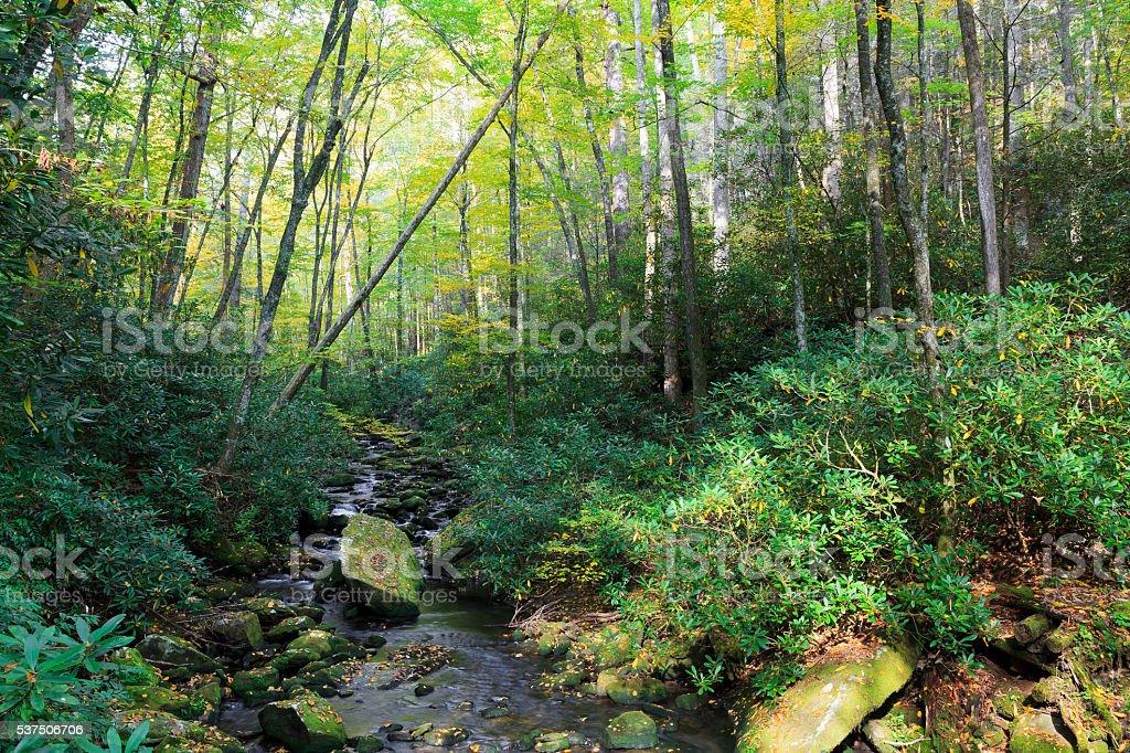 Joyce Kilmer Forest and Stream stock photo