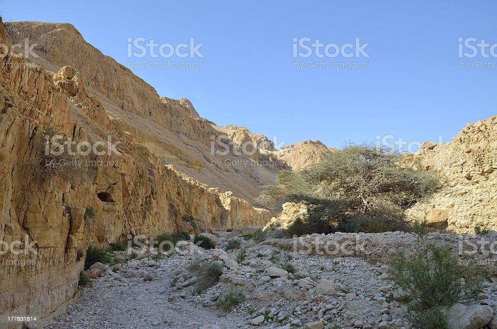 Judea desert. royalty-free stock photo