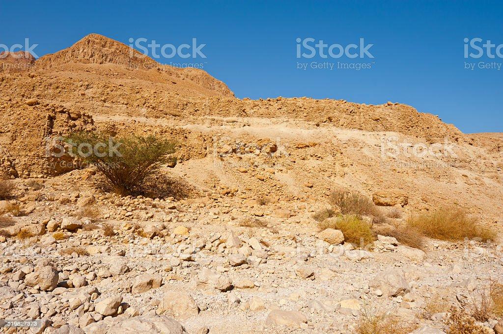 Judean Desert stock photo