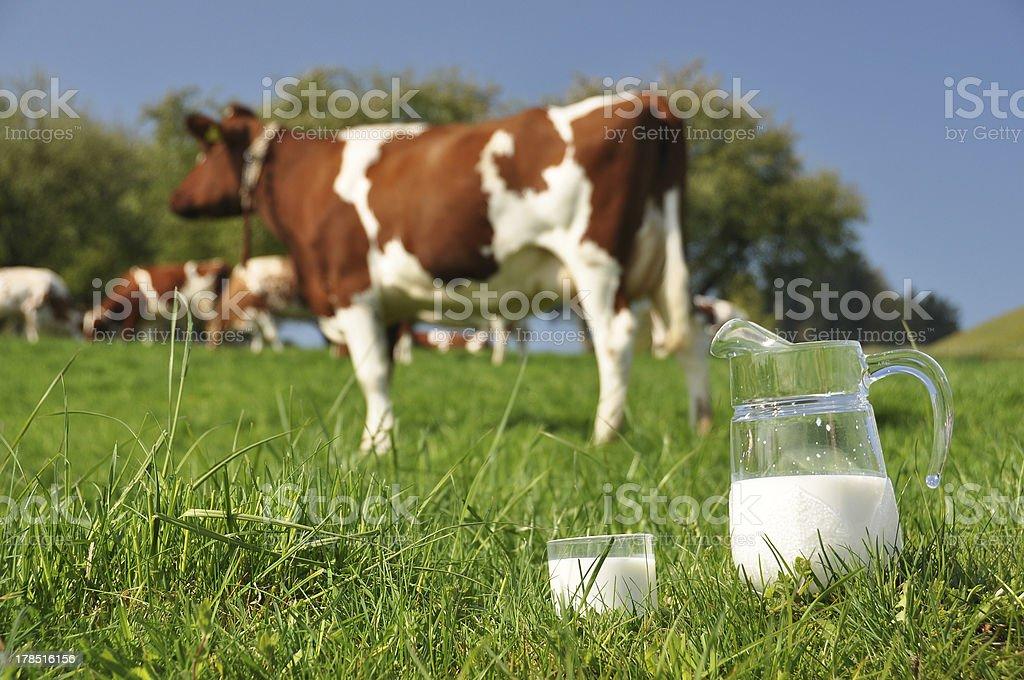 Jug of milk royalty-free stock photo