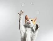 Juggling Cat