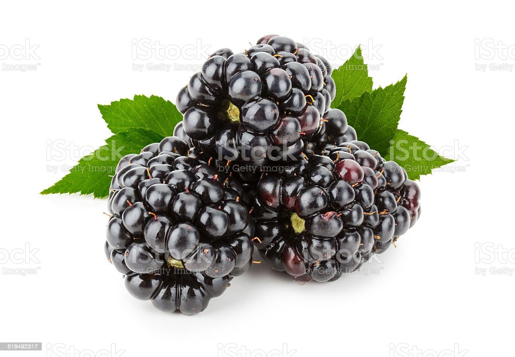 juicy blackberry isolated on the white background stock photo